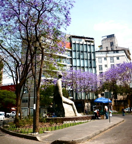 The Color of Spring in Mexico City